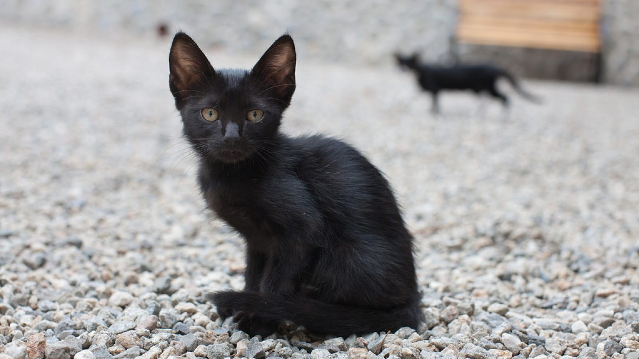 6 Ways To Fatten Up A Skinny Kitten Safe And Fast Animal Lova