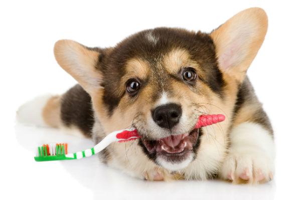 clean-dogs-teeth