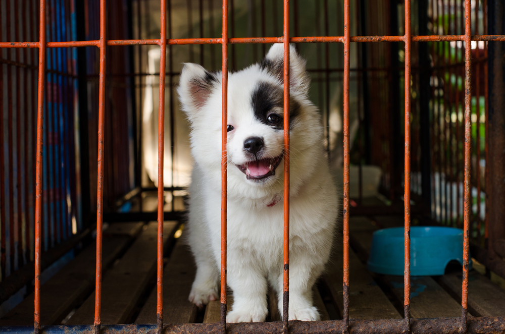 dog-shelter