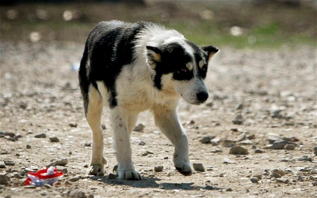 ex-feral-dog
