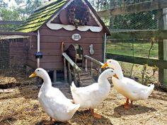 duck-pet