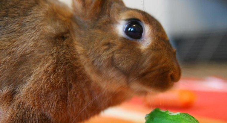 cucumber-for-rabbit
