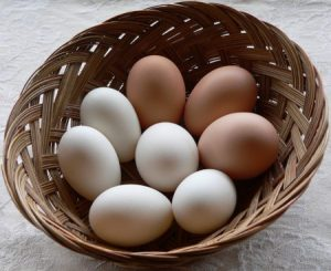 duck-and-chicken-eggs