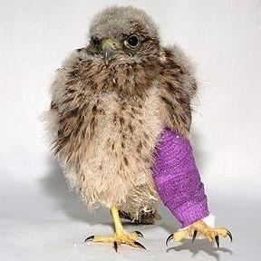 bird-leg