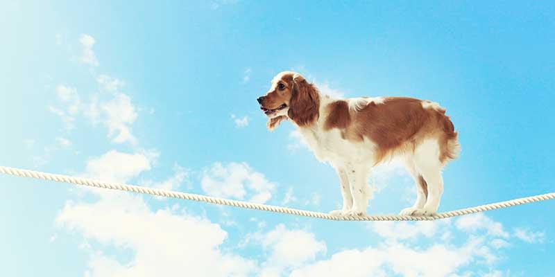 dog-myths