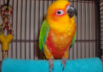 disadvantages-youll-get-by-keeping-parrot-as-pet-